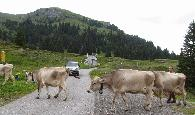 Traffic jam in Arosa